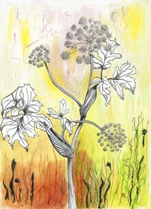 Angelica pen & ink + acrylic ink Rosemary Dodgson