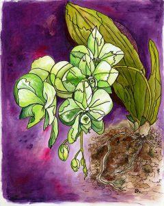 Orchid acrylic tiff Rosemary Dodgson